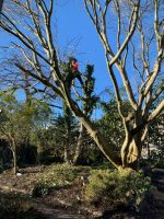 Dismantling some trees in a private garden